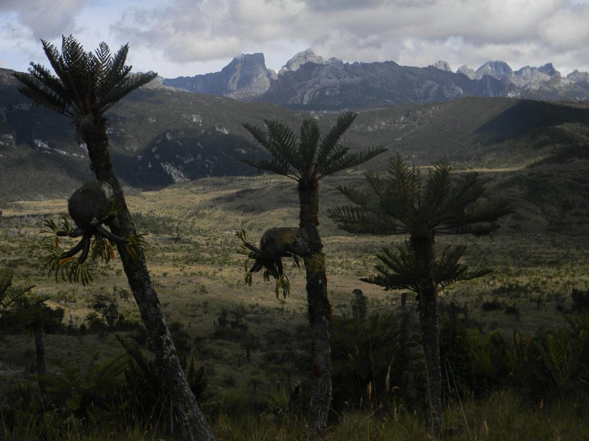 Puncak Jaya and Sumantri with fern trees (Robert Cassady, 2010)