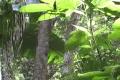 indonesia_0997