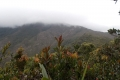 Gunung Tahan a look to the final summit ridge